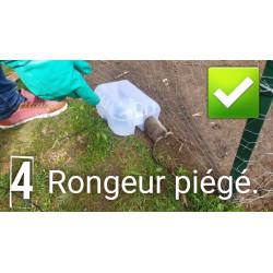 """Photo prouvant l'efficacité du piège à rat sécurisé """"sécuriposte"""" : le rat est pris !"""