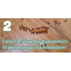 Le gel anti fourmi est transporté par les fourmis jusqu'à la fourmilière