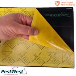 La recharge de plaque de glu Pestwest pour la gamme Chameleon est toujours de couleur noire.